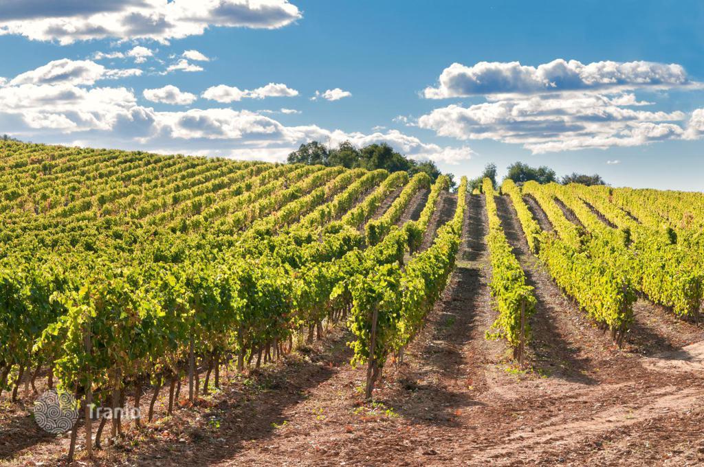 купить виноградник в тоскане
